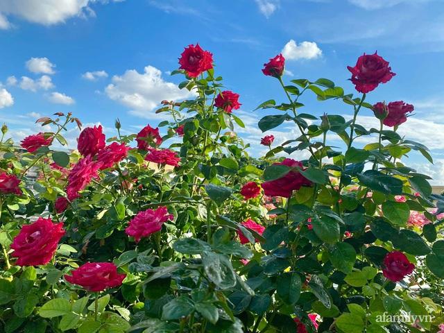 Sân thượng phủ kín hoa hồng và rau quả sạch ở Sài Gòn của Hoa hậu Janny Thủy Trần - Ảnh 16.