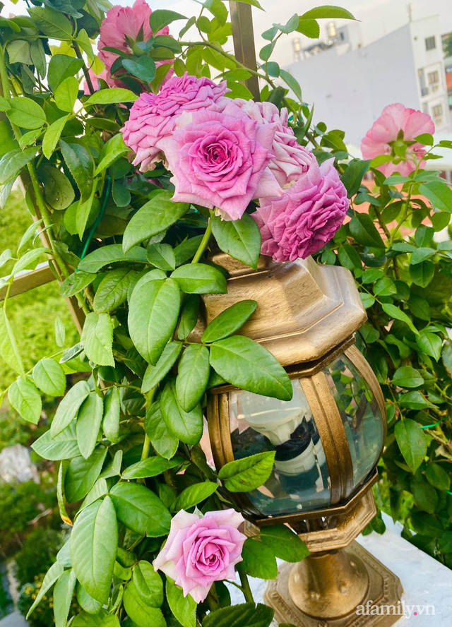 Sân thượng phủ kín hoa hồng và rau quả sạch ở Sài Gòn của Hoa hậu Janny Thủy Trần - Ảnh 17.