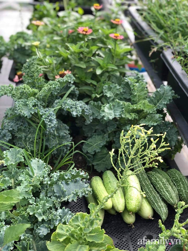"""Mẹ Đà Nẵng tạo ra """"nông trại"""" rau quả sạch trên tầng thượng giúp cả nhà vui khỏe trong những ngày giãn cách - Ảnh 17."""
