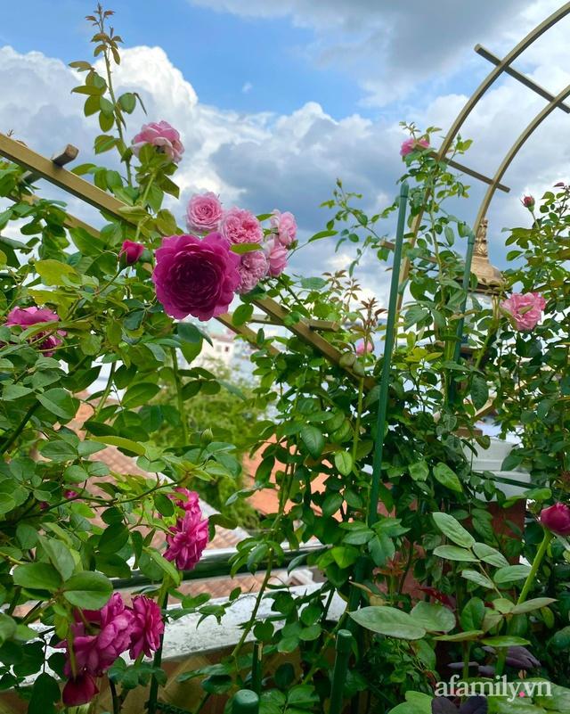 Sân thượng phủ kín hoa hồng và rau quả sạch ở Sài Gòn của Hoa hậu Janny Thủy Trần - Ảnh 18.