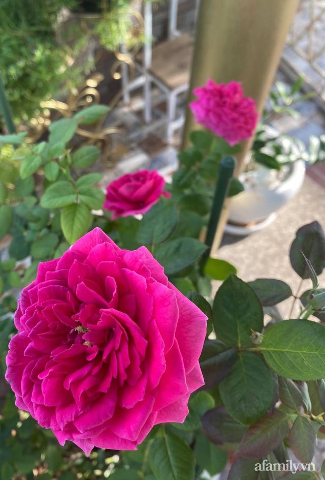 Sân thượng phủ kín hoa hồng và rau quả sạch ở Sài Gòn của Hoa hậu Janny Thủy Trần - Ảnh 19.