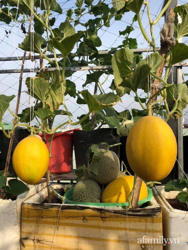 """Mẹ Đà Nẵng tạo ra """"nông trại"""" rau quả sạch trên tầng thượng giúp cả nhà vui khỏe trong những ngày giãn cách - Ảnh 20."""