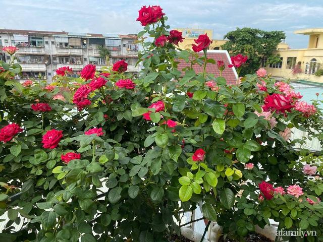 Sân thượng phủ kín hoa hồng và rau quả sạch ở Sài Gòn của Hoa hậu Janny Thủy Trần - Ảnh 3.
