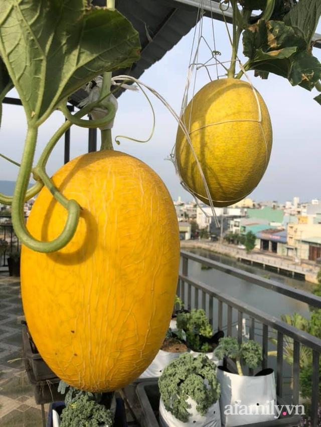 """Mẹ Đà Nẵng tạo ra """"nông trại"""" rau quả sạch trên tầng thượng giúp cả nhà vui khỏe trong những ngày giãn cách - Ảnh 23."""