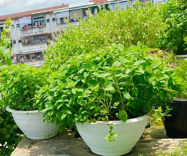 Sân thượng phủ kín hoa hồng và rau quả sạch ở Sài Gòn của Hoa hậu Janny Thủy Trần - Ảnh 27.