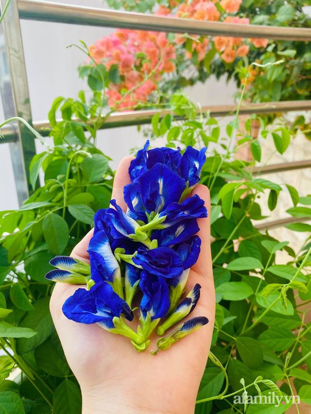 Sân thượng phủ kín hoa hồng và rau quả sạch ở Sài Gòn của Hoa hậu Janny Thủy Trần - Ảnh 28.