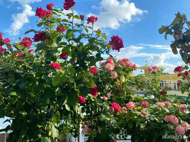 Sân thượng phủ kín hoa hồng và rau quả sạch ở Sài Gòn của Hoa hậu Janny Thủy Trần - Ảnh 4.