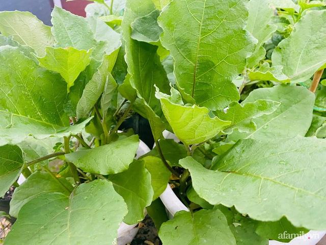 Sân thượng phủ kín hoa hồng và rau quả sạch ở Sài Gòn của Hoa hậu Janny Thủy Trần - Ảnh 34.