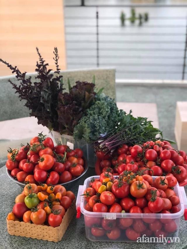 """Mẹ Đà Nẵng tạo ra """"nông trại"""" rau quả sạch trên tầng thượng giúp cả nhà vui khỏe trong những ngày giãn cách - Ảnh 5."""