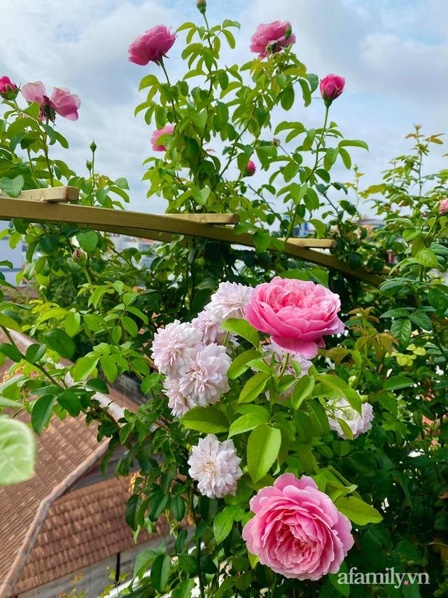 Sân thượng phủ kín hoa hồng và rau quả sạch ở Sài Gòn của Hoa hậu Janny Thủy Trần - Ảnh 6.