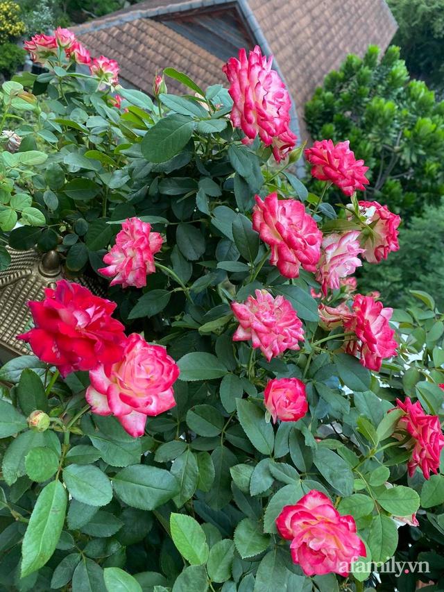 Sân thượng phủ kín hoa hồng và rau quả sạch ở Sài Gòn của Hoa hậu Janny Thủy Trần - Ảnh 7.