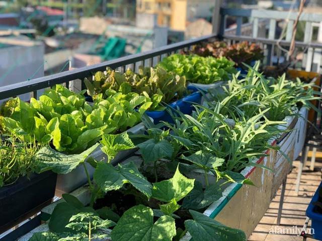 """Mẹ Đà Nẵng tạo ra """"nông trại"""" rau quả sạch trên tầng thượng giúp cả nhà vui khỏe trong những ngày giãn cách - Ảnh 7."""