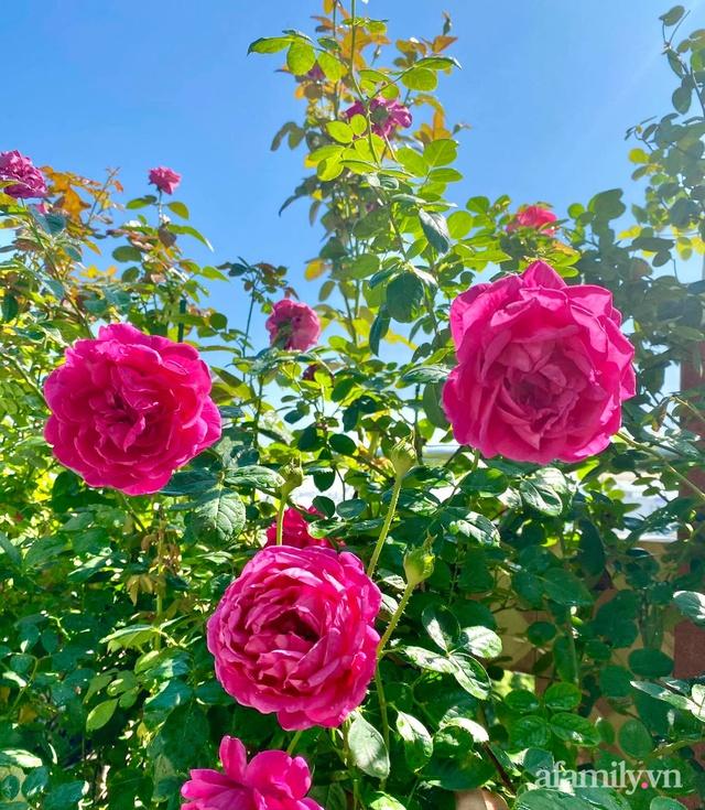 Sân thượng phủ kín hoa hồng và rau quả sạch ở Sài Gòn của Hoa hậu Janny Thủy Trần - Ảnh 8.