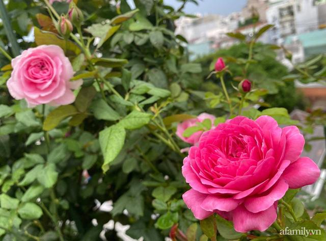 Sân thượng phủ kín hoa hồng và rau quả sạch ở Sài Gòn của Hoa hậu Janny Thủy Trần - Ảnh 9.