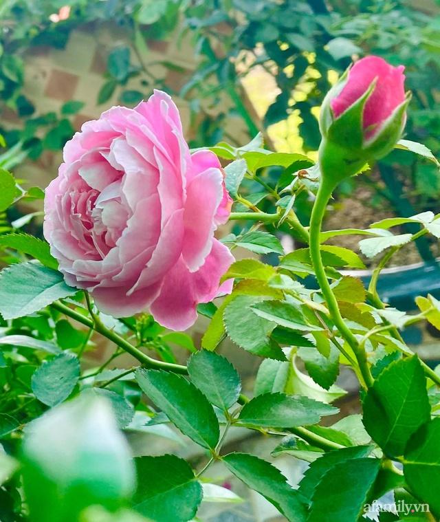 Sân thượng phủ kín hoa hồng và rau quả sạch ở Sài Gòn của Hoa hậu Janny Thủy Trần - Ảnh 10.