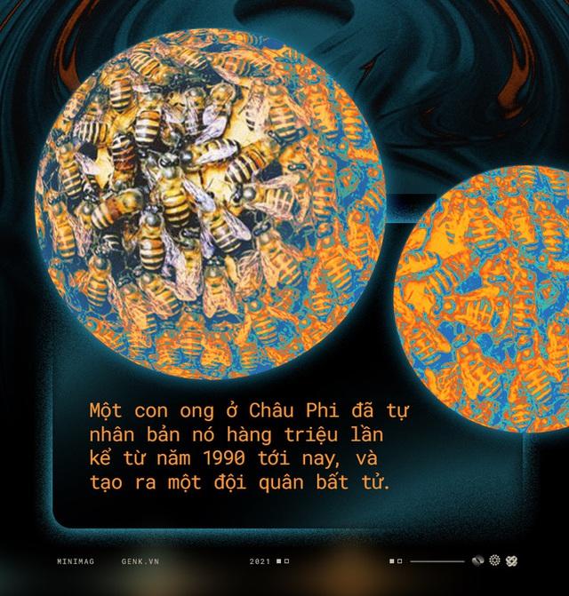 Một con ong ở Châu Phi đã tự nhân bản nó hàng triệu lần kể từ năm 1990 tới nay và tạo ra một đội quân clone bất tử - Ảnh 1.
