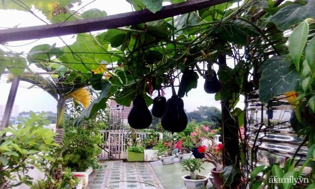 Khu vườn xanh tươi không khác gì nông trại trên sân thượng ở TP Thủ Đức, Sài Gòn - Ảnh 15.