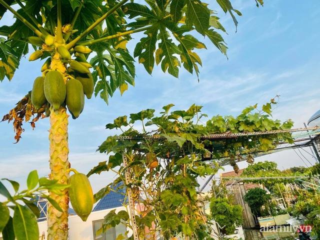 Khu vườn xanh tươi không khác gì nông trại trên sân thượng ở TP Thủ Đức, Sài Gòn - Ảnh 19.
