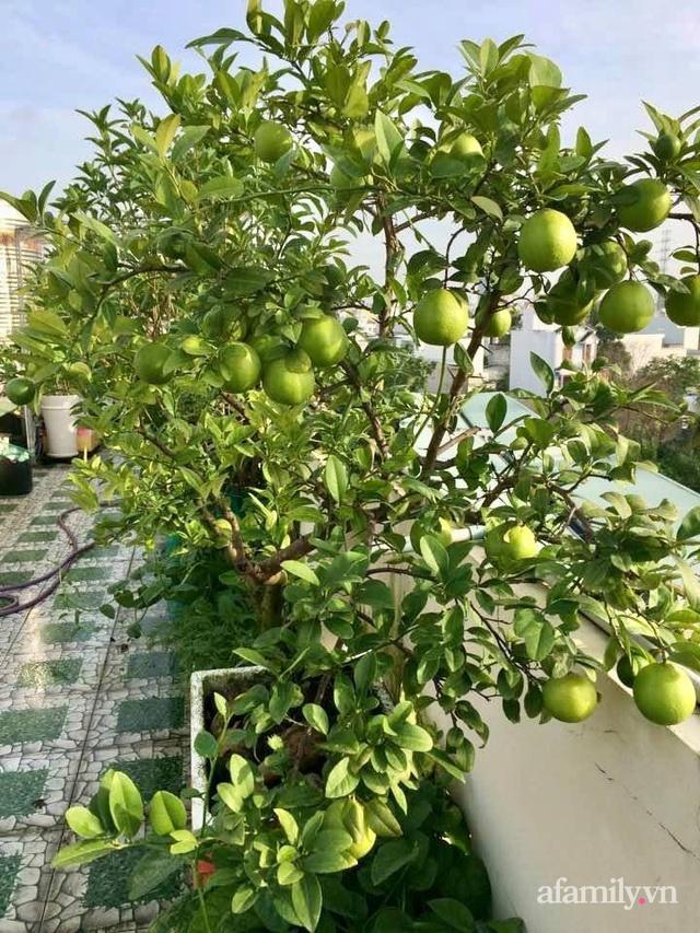 Khu vườn xanh tươi không khác gì nông trại trên sân thượng ở TP Thủ Đức, Sài Gòn - Ảnh 24.