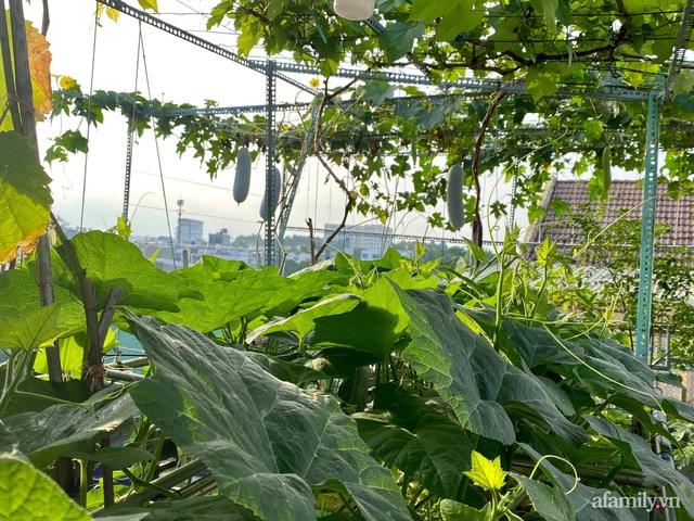 Khu vườn xanh tươi không khác gì nông trại trên sân thượng ở TP Thủ Đức, Sài Gòn - Ảnh 5.