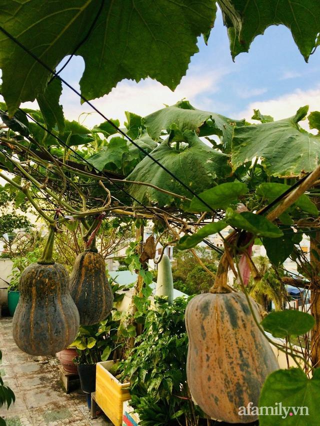 Khu vườn xanh tươi không khác gì nông trại trên sân thượng ở TP Thủ Đức, Sài Gòn - Ảnh 9.