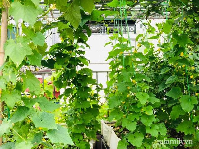 Siêu thị rau quả sạch không thiếu thứ gì trên sân thượng 70m² ở Hà Nội - Ảnh 2.