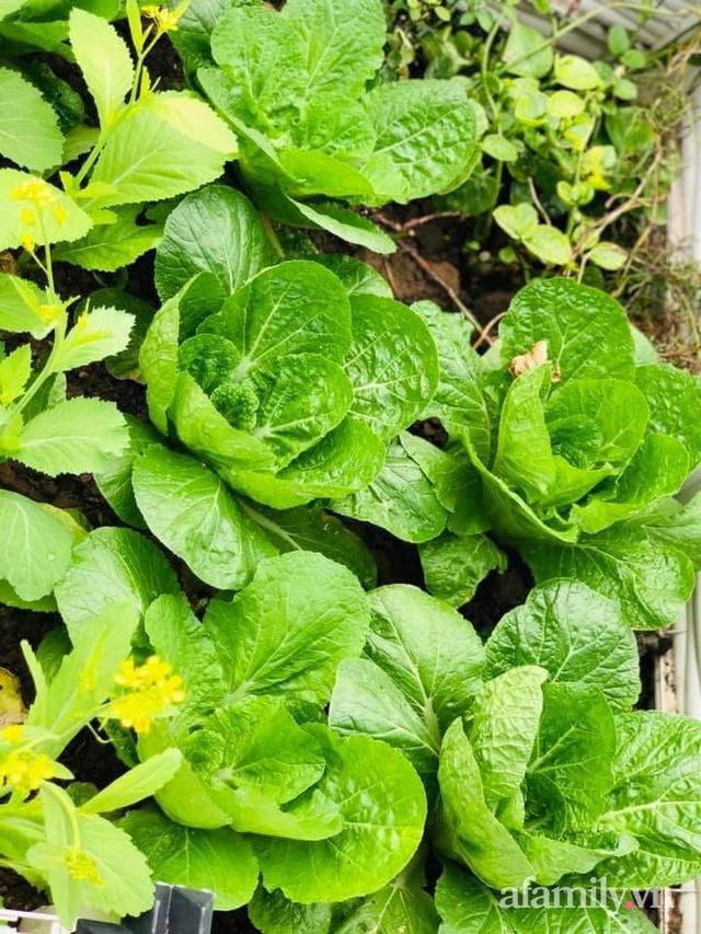 Siêu thị rau quả sạch không thiếu thứ gì trên sân thượng 70m² ở Hà Nội - Ảnh 11.