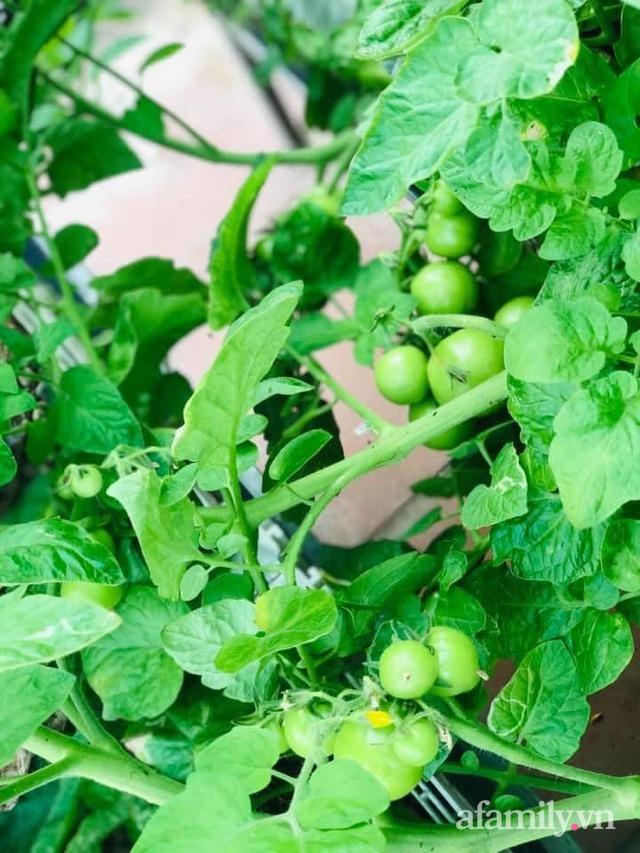 Siêu thị rau quả sạch không thiếu thứ gì trên sân thượng 70m² ở Hà Nội - Ảnh 12.