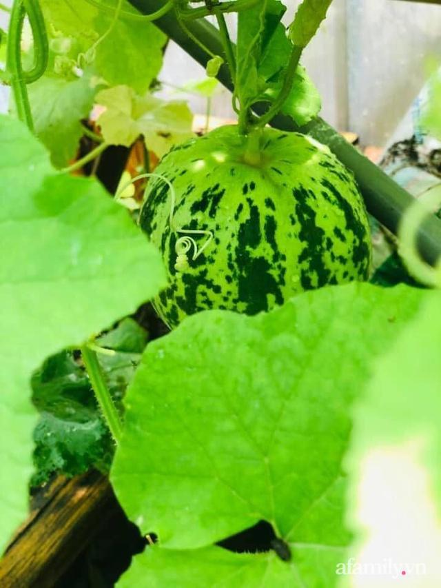 Siêu thị rau quả sạch không thiếu thứ gì trên sân thượng 70m² ở Hà Nội - Ảnh 13.
