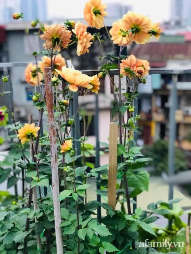 Siêu thị rau quả sạch không thiếu thứ gì trên sân thượng 70m² ở Hà Nội - Ảnh 14.