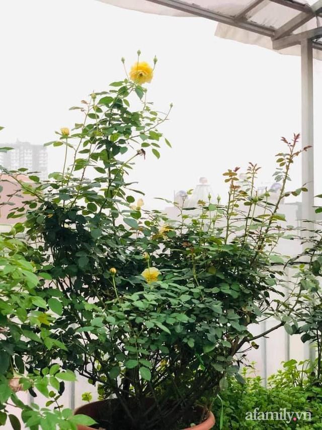 Siêu thị rau quả sạch không thiếu thứ gì trên sân thượng 70m² ở Hà Nội - Ảnh 16.