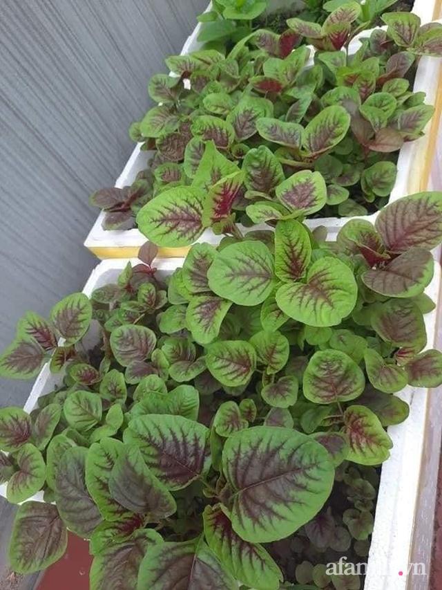 Siêu thị rau quả sạch không thiếu thứ gì trên sân thượng 70m² ở Hà Nội - Ảnh 18.