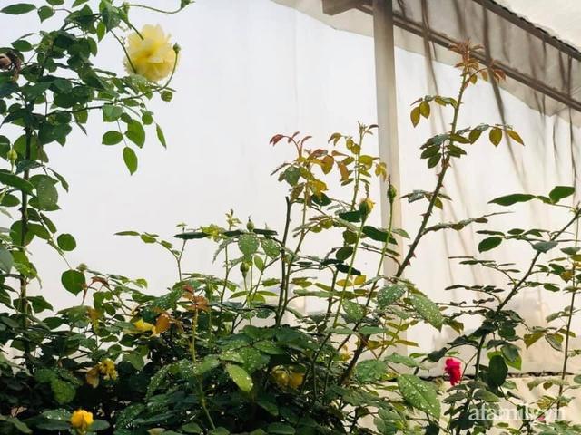 Siêu thị rau quả sạch không thiếu thứ gì trên sân thượng 70m² ở Hà Nội - Ảnh 3.