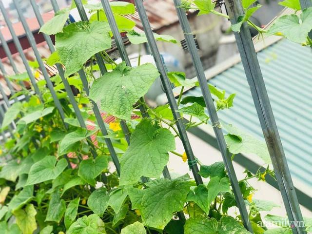Siêu thị rau quả sạch không thiếu thứ gì trên sân thượng 70m² ở Hà Nội - Ảnh 23.
