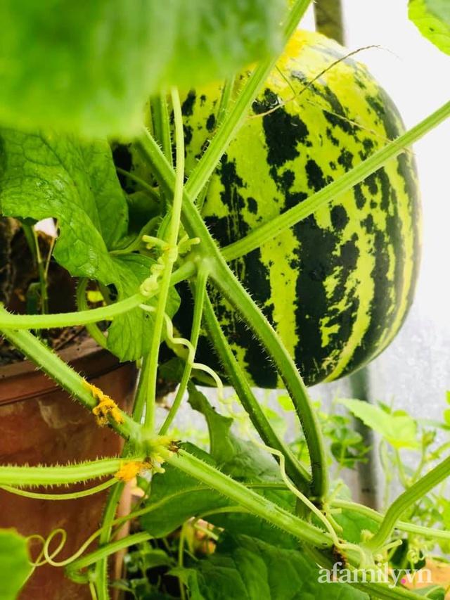 Siêu thị rau quả sạch không thiếu thứ gì trên sân thượng 70m² ở Hà Nội - Ảnh 24.