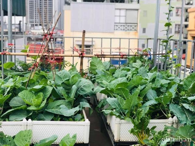 Siêu thị rau quả sạch không thiếu thứ gì trên sân thượng 70m² ở Hà Nội - Ảnh 4.
