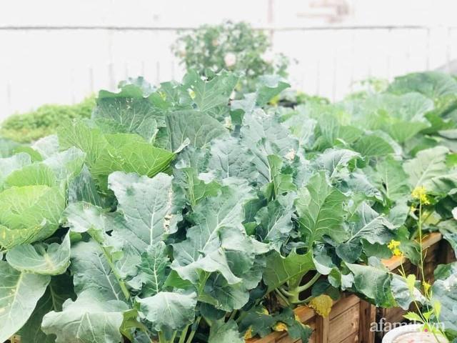 Siêu thị rau quả sạch không thiếu thứ gì trên sân thượng 70m² ở Hà Nội - Ảnh 6.