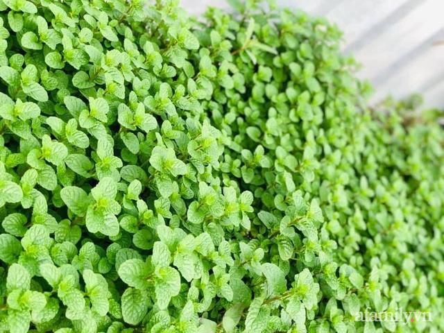 Siêu thị rau quả sạch không thiếu thứ gì trên sân thượng 70m² ở Hà Nội - Ảnh 7.