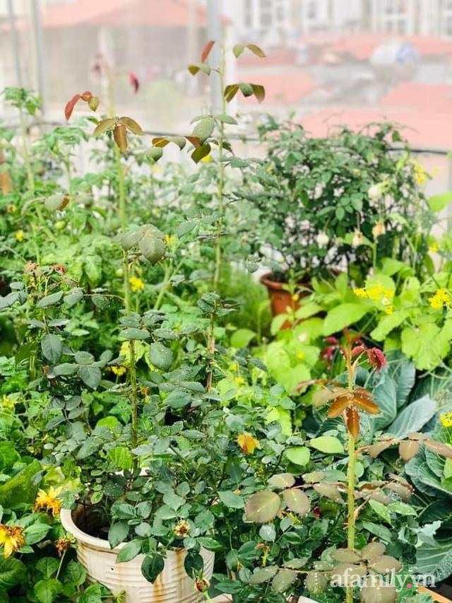 Siêu thị rau quả sạch không thiếu thứ gì trên sân thượng 70m² ở Hà Nội - Ảnh 10.