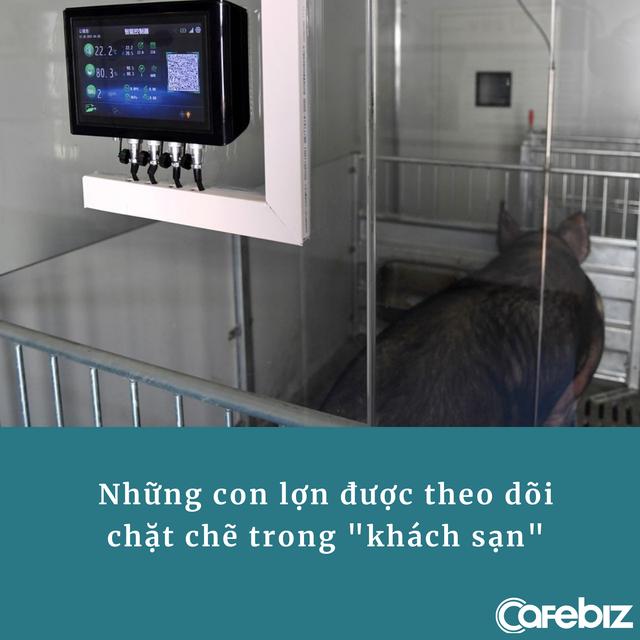 Trung Quốc xây khách sạn 13 tầng dành cho... lợn vì sợ bị nhiễm virus: Có dịch vụ thú y tại chỗ, bữa ăn được chuẩn bị cẩn thận - Ảnh 1.