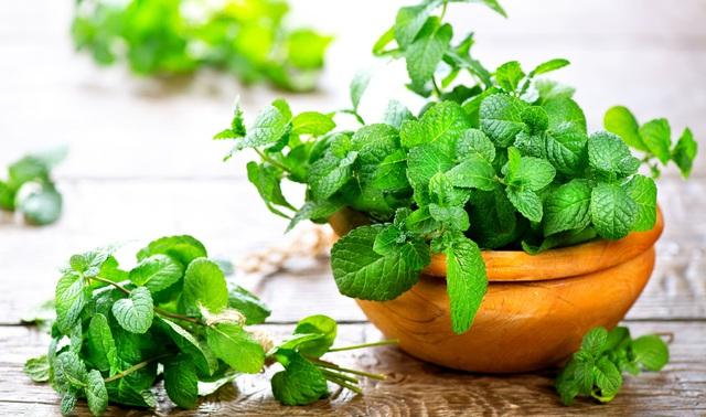 8 loại cây vừa dễ trồng vừa là kho thuốc quý trong nhà, đặc biệt là trong mùa dịch bệnh này - Ảnh 3.