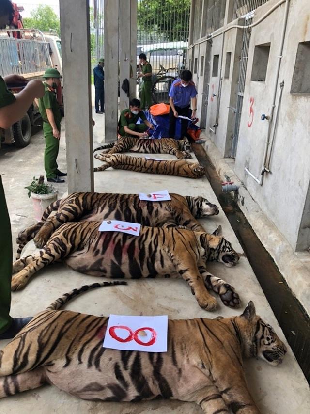 Vụ nuôi nhốt 17 con hổ trong nhà như nuôi heo: Chủ nhà xây tầng hầm rộng cả trăm mét để tránh bị phát hiện - Ảnh 4.