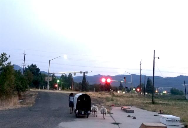 12 năm phiêu diêu tự tại của người đàn ông sống trong ngôi nhà di động là chiếc xe ba bánh cũ vỏn vẹn 2 mét vuông và nuôi 4 con cừu làm bạn đồng hành  - Ảnh 33.