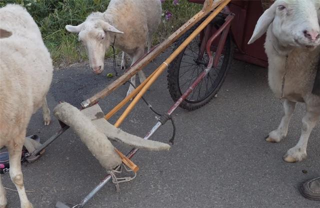 12 năm phiêu diêu tự tại của người đàn ông sống trong ngôi nhà di động là chiếc xe ba bánh cũ vỏn vẹn 2 mét vuông và nuôi 4 con cừu làm bạn đồng hành  - Ảnh 21.