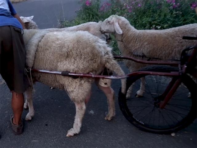 12 năm phiêu diêu tự tại của người đàn ông sống trong ngôi nhà di động là chiếc xe ba bánh cũ vỏn vẹn 2 mét vuông và nuôi 4 con cừu làm bạn đồng hành  - Ảnh 22.