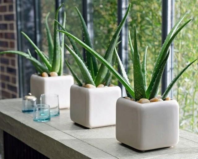8 loài cây phù hợp trồng trong phòng tắm, vừa giúp trang trí vừa lọc không khí, khử mùi hiệu quả - Ảnh 5.