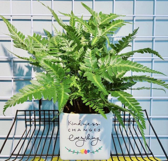 8 loài cây phù hợp trồng trong phòng tắm, vừa giúp trang trí vừa lọc không khí, khử mùi hiệu quả - Ảnh 9.