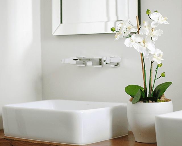 8 loài cây phù hợp trồng trong phòng tắm, vừa giúp trang trí vừa lọc không khí, khử mùi hiệu quả - Ảnh 13.