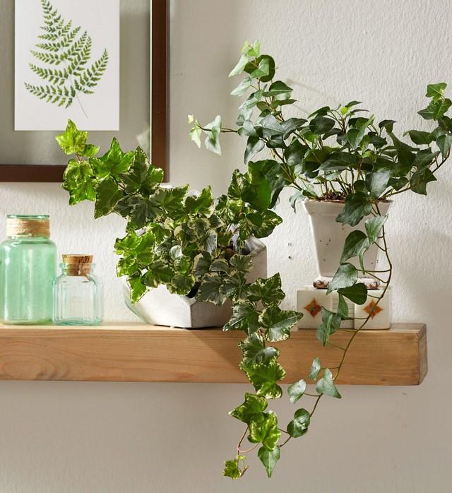 8 loài cây phù hợp trồng trong phòng tắm, vừa giúp trang trí vừa lọc không khí, khử mùi hiệu quả - Ảnh 7.