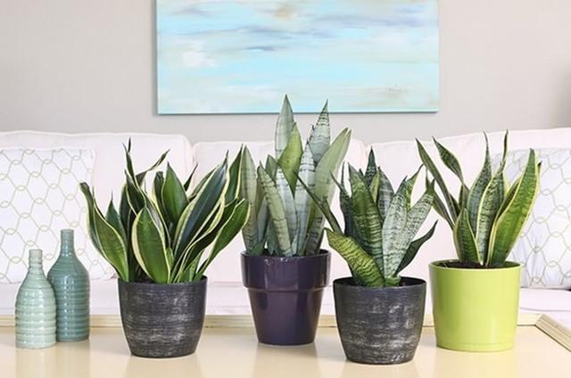 8 loài cây phù hợp trồng trong phòng tắm, vừa giúp trang trí vừa lọc không khí, khử mùi hiệu quả - Ảnh 1.
